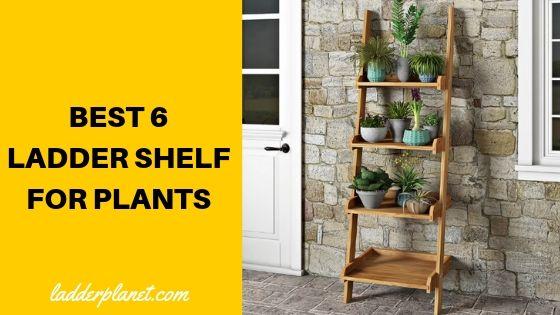 Ladder Shelf For Plants