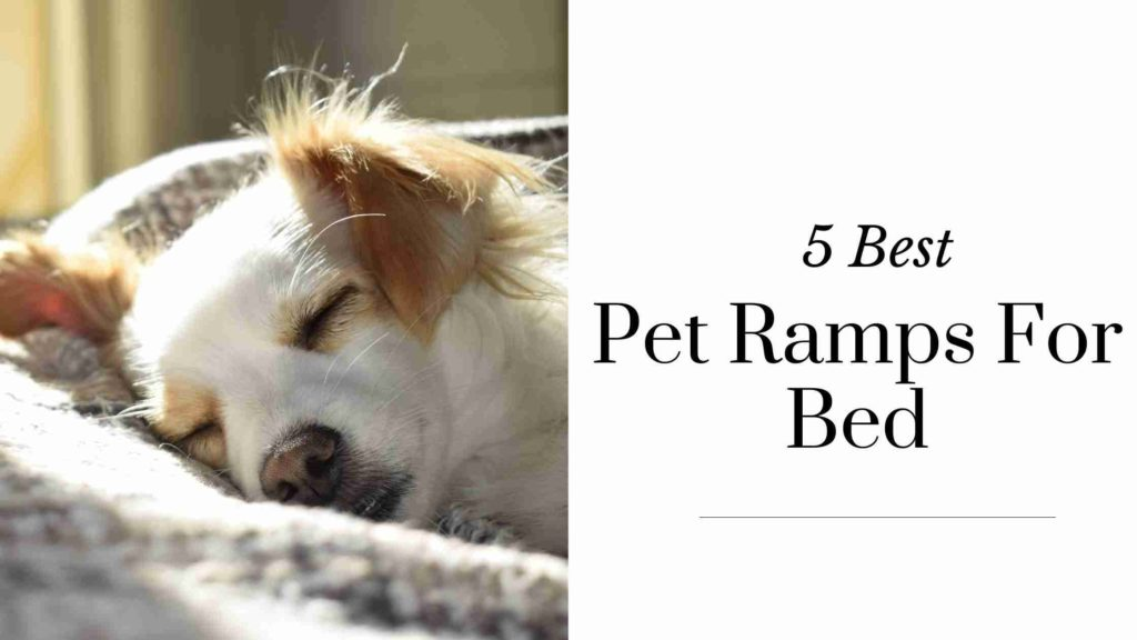 Best Pet Ramps For Bed